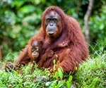 Smoke from fires may pose threat to orangutans, finds study