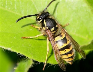 Sanctions prevent cheating and lead to better, more mutually beneficial fig-wasp relationships