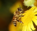 Scientists develop new way to monitor electrostatic signals emitted by honeybees