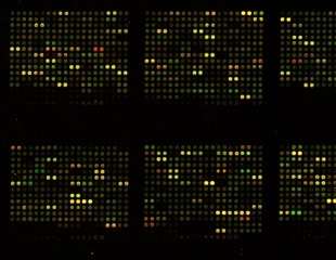 High-density microarray patch could help vaccinate for dengue in a single click
