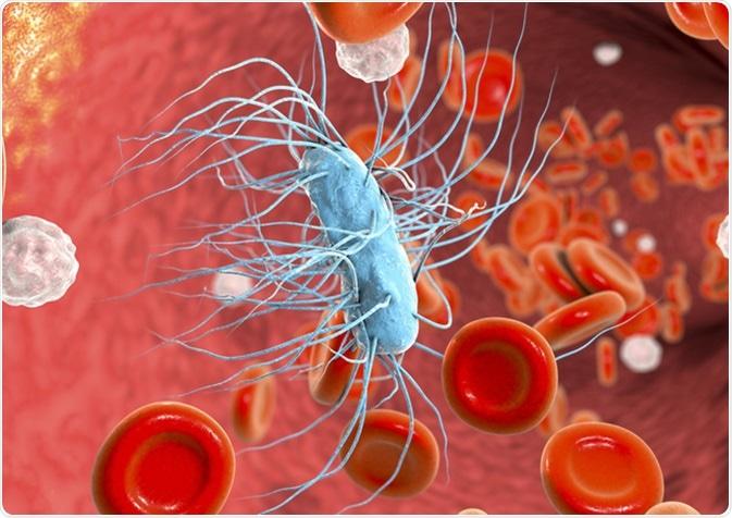 Sepsia, bacteriemia, bacteria de Escherichia Coli en la sangre - Kateryna Kon/Shutterstock
