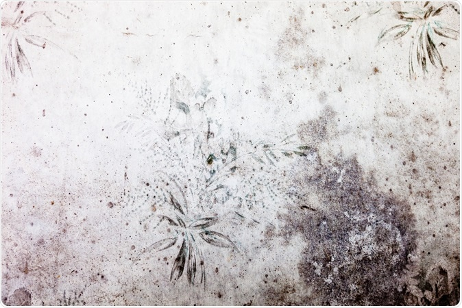 Fungal toxins from wallpaper source of illness says new research. Old dingy and dirty wallpaper with floral pattern. Image Credit: rootstock / Shutterstock