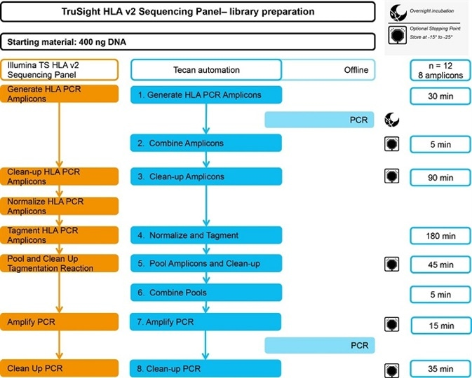 The automated TruSight HLA v2 Sequencing Panel workflow. Timings are indicated for 12 samples with 8 amplicons each, running in less than one working day.