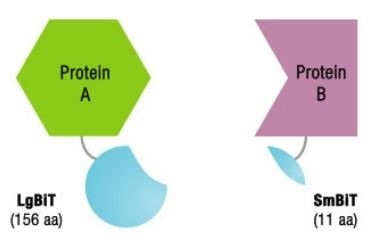 Before Protein-Protein Interactions