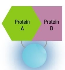 After Protein-Protein Interactions
