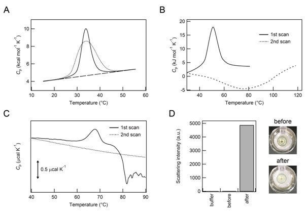 Thermal unfolding and subsequent aggregation of proteins. Panes A and B: Illustration of DSC thermograms of native folding and aggregation. Pane A: The continuous line represents a Cp curve of rmIII-9 observed and the dotted line indicates a best fit of the peak to a single two-state thermal transition (see Figure 5B of Litvinovich et al. [23] for more details). Pane B: First and second heating of ARQ are shown with continuous and dotted lines, respectively (see Figures 3C and 4D of Rezaei et al. for ARQ [25] for more details). Pane C: DSC thermograms of FNR. First and second heat scans are shown with continuous and dotted lines, respectively. Pane D: Top views of test tubes containing FNR sample solutions before (upper) and after (lower) DSC measurements on the right. Light scattering intensities of 25 mM sodium phosphate buffer (pH 7.4) alone, and FNR samples before and after DSC measurements on the left.