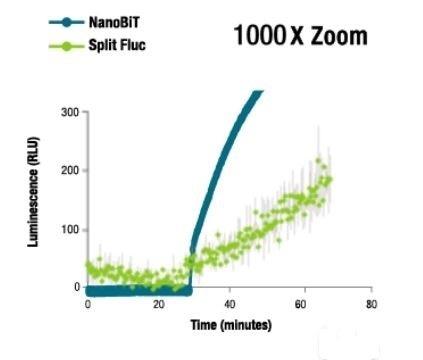 NanoBiT® Luminescence at 1000X Zoom