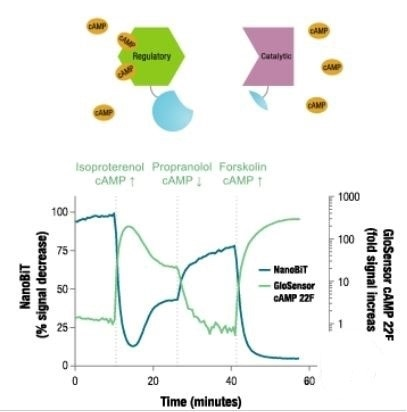 Reversible interaction dynamics of proteins in living cells.