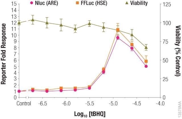 Measuring antioxidant response element (ARE) and heat shock response element (HSE) responses followed by cell viability from the same sample.