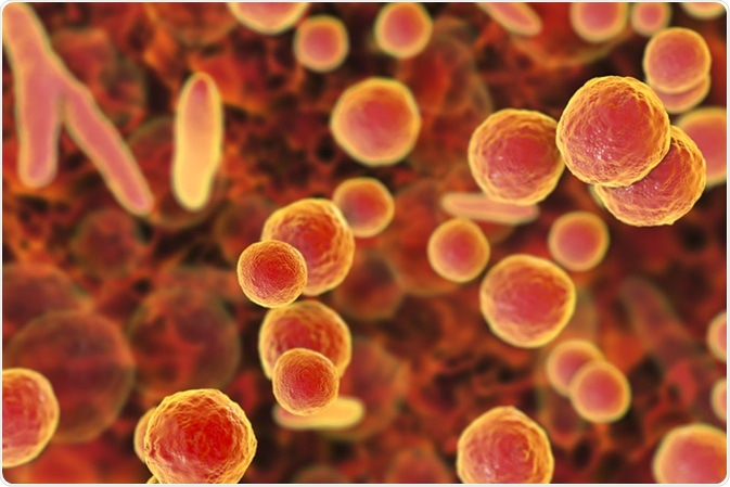Mycoplasma bacteria, 3D illustration showing small polymorphic bacteria which cause pneumonia, genital and urinary infections Image Credit: Kateryna Kon / Shutterstock