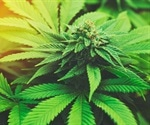 Marijuana use linked with risk of death from hypertension, study says