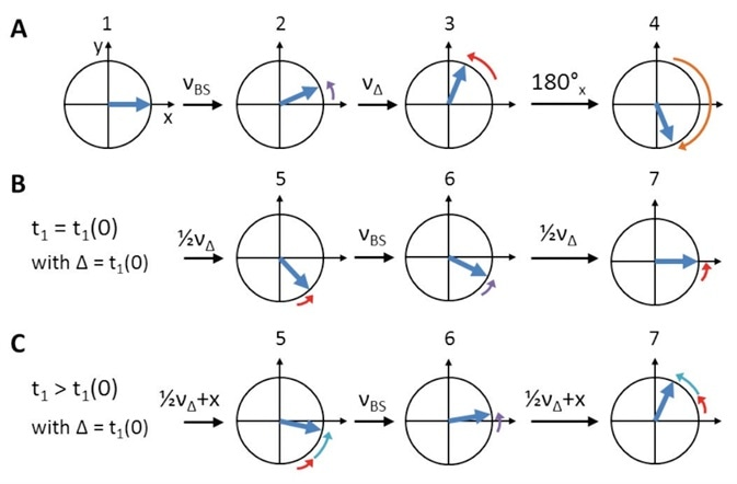 Schematic representation of Bloch-Siegert shift and initial t1 (t1(0)) phase evolution compensation. Numbers refer to 'hCaNH3D.tcp'/'hCONH3D.tcp' pulprog of Figure 4. (A) After the initial CP, on-resonance 13C spins (blue) are oriented along X (1). The first off-resonance π pulse creates a Bloch-Siegert shift, νBS, (2, purple arrows). During the symmetry delay, Δ, which equals t1(0), additional chemical shift, νΔ, evolves (3, red arrows). Overall, evolution is reversed by the on-resonance π pulse (4, orange arrow) to refocus both νBS (6) and νΔ (5 and 7, steps of '½νΔ' are due to split t1). While during t1(0) chemical shift evolution is refocused completely (B), it further evolves ('+x', cyan arrows) for all t1 times larger than Δ (C).