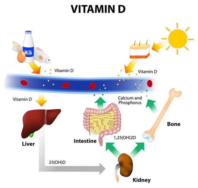 Sources of Vitamin D. Image Credit: Designua / Shutterstock