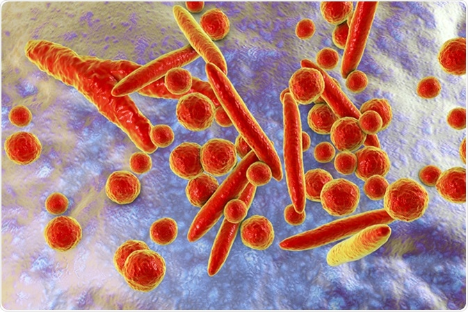 Mycoplasma bacteria, 3D illustration showing small polymorphic bacteria which cause pneumonia, genital and urinary infections. Image Credit: Kateryna Kon / Shutterstock