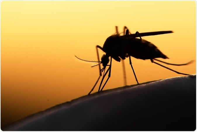 Mosquito. Image Credit: mycteria / Shutterstock