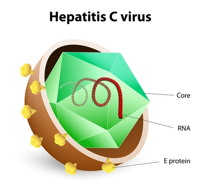 Hepatitis C virus illustration. Image Credit: Designua / Shutterstock