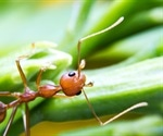 Component of fire ant venom shows promise as a psoriasis treatment