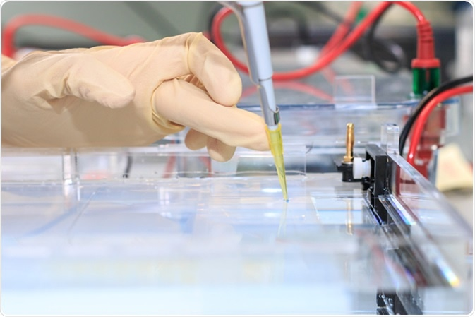 Loading the blue DNA samples into the agarose gel for the separation of DNA fragments. Image Credit: Mariia Mikhailova / Shutterstock