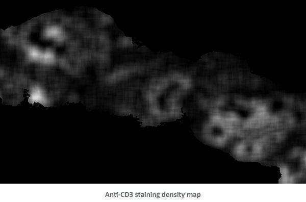 AntiCD3 DensityMap