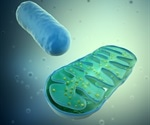 Viral replication process weak spot may help develop cure for infections