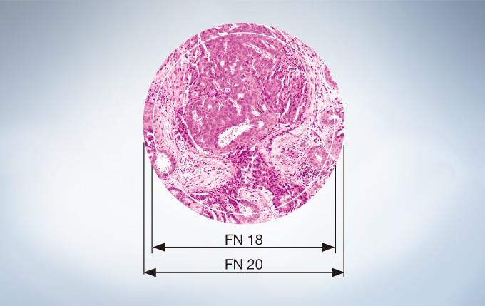 Field Number (FN) of 20