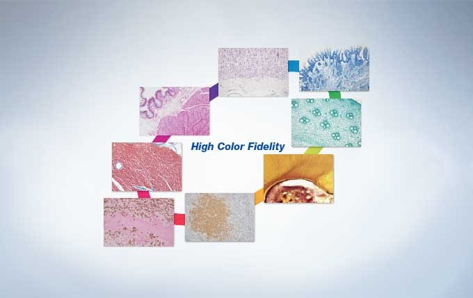 High Color Fidelity for Most Stains Used in the Life Sciences