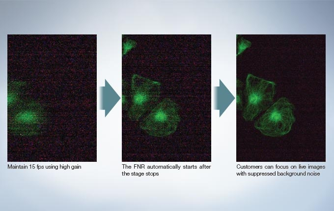 Focus on Dim Fluorescent Signals with Intelligently Designed Noise Reduction