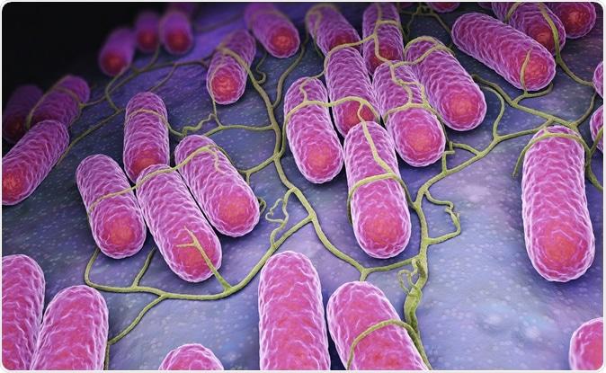 Culture of Salmonella bacteria. 3D illustration. Image Credit:  Tatiana Shepeleva / Shutterstock