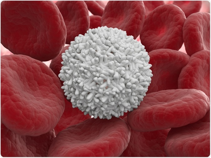 Immune system - white blood cell next to red blood cells - By Mopic
