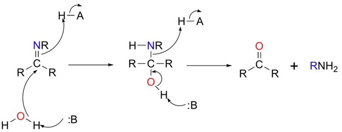 Figure 3 Imines can be hydrolysed (split with water) to give the starting aldehyde (or ketone) and amine. Note that the reaction is acid assisted.