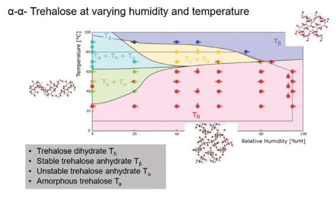 RH-T phase diagram for trehalose.