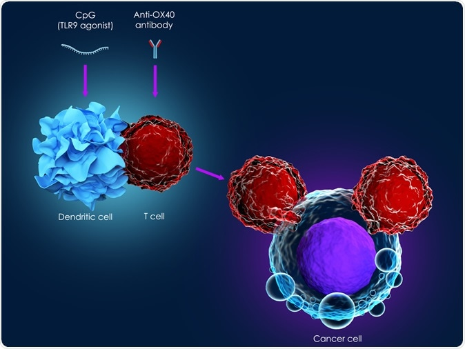 3d illustration of cancer immunotherapy using CpG combined with anti-OX40 antibody. Image Credit: Meletios Verras / Shutterstock