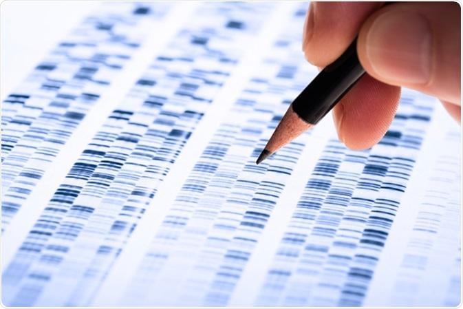 Lo scienziato analizza il gel del DNA utilizzato nella genetica, nella dialettica, nella scoperta della droga, nella biologia e nella medicina. Credito di immagine: Gopixa/Shutterstock
