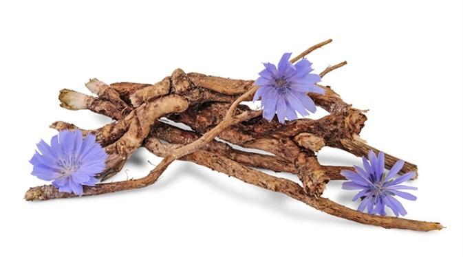 Dry roots of chicory and cichorium flowers. Image Credit: Nata Studio / Shutterstock
