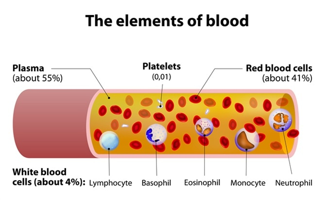 The elements of blood. blood vessel cut section. Image Credit: Designua / Shutterstock