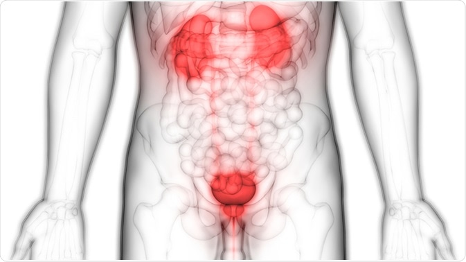 Human Body Organs (Kidneys with Urinary Bladder). Image Credit: Magic mine / Shutterstock