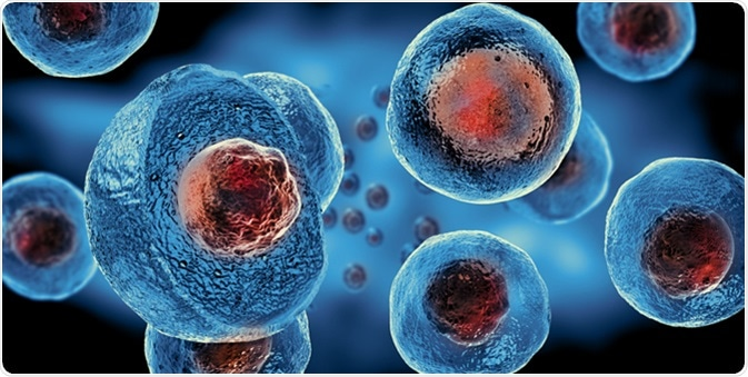 Embryonic stem cells 3d rendering illustration. Image Credit: Giovanni Cancemi / Shutterstock