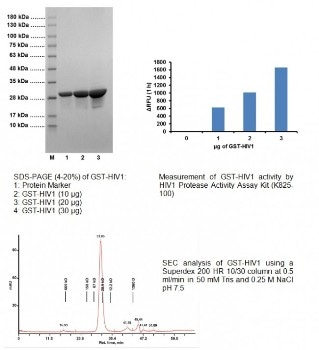 GST-Tagged Active HIV1 Protease Recombinant