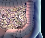 Study uncovers link between gut disruption and aging