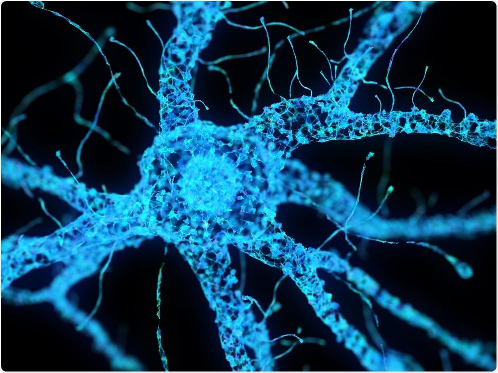 Neuronal cells - Sebastian Kaulitzki