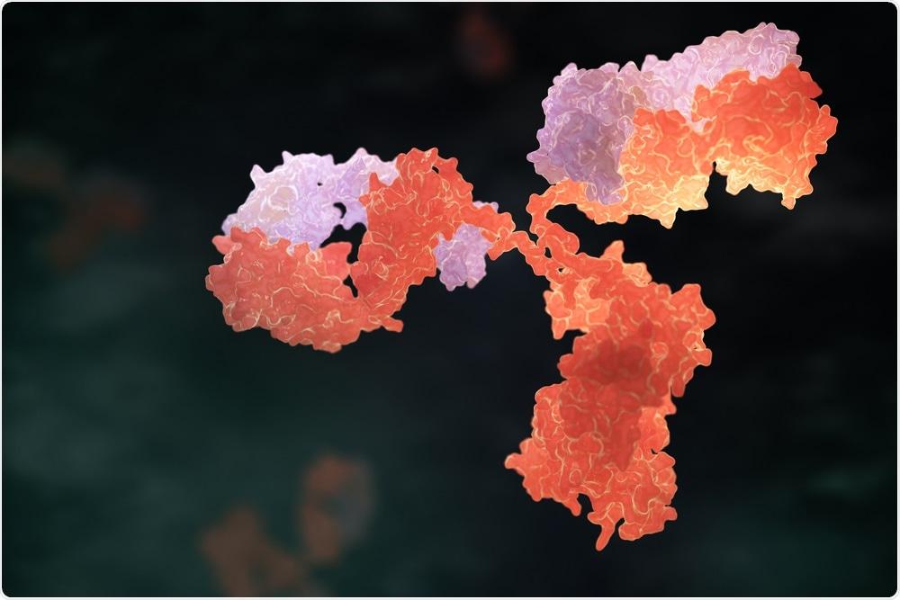 Antibody - typically used in Western blotting - Tatiana Shepeleva