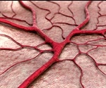 Pericytes: Purpose and Function