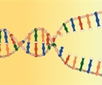 Holliday Junctions in DNA Replication