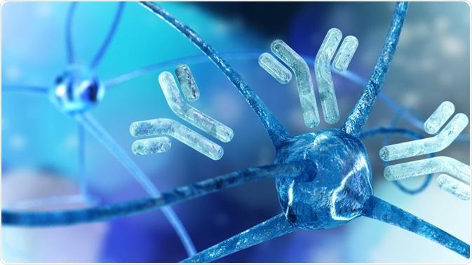 Antibodies surrounding neuron - By ustas7777777