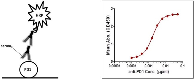 Detection of PD-1 antibody by indirect ELISA.