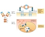 Key Features of SPR-Verified Fc Receptor Proteins