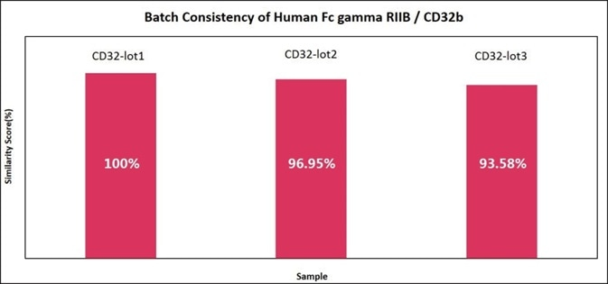 Batch consistency of Human Fc gamma RIIB/CD32b (Cat. No. CDB-H5228). The Similarity for different batches is more than 90%.