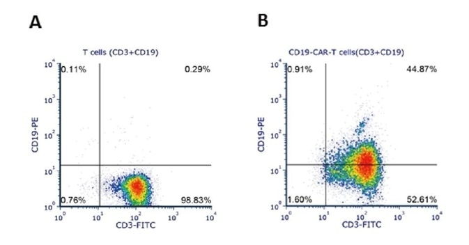 Human T cells were lentivirally transduced with anti-CD19 CAR and cultured for 11 days. Eleven days post-transduction, 1e6 cells were stained for the expression of CD3 and anti-CD19 CAR with FITC anti-human CD3 antibody and biotinylated human CD19 (Cat. No. CD9-H8259) followed by PE-conjugated streptavidin, respectively. A. Non-transduced T cells were used as a control for gating of CAR expression. (Data are kindly provided by Beijing Bowei Huaen Medical Technology Co. Ltd.)