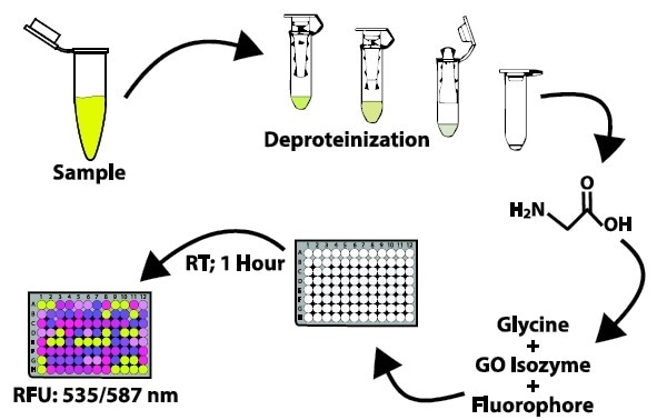 Detecting Glycine in Biological Samples Using Enzymatic Assays