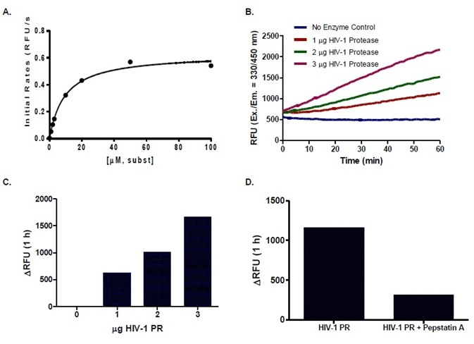 (A) BioVision's HIV-1 PR follows a typical Michaelis-Menten Kinetics with the HIV-1 PR-specific proprietary substrate with Km of 9.5 µM. (B) Progressive kinetic curves of different amounts of HIV-1 PR are linear for an extended period of time (1-3 h), indicating the stability of the enzyme under assay conditions. (C) HIV-PR yields a measurable fluorescence even within 1 h of assay. (D) HIV-PR activity was abolished by the presence of Pepstatin A inhibitor.